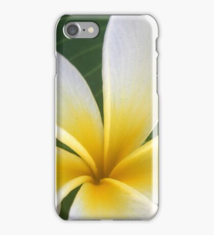 Sweet Plumeria Springtime iPhone Case/Skin