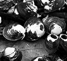 Shells by Mari  Wirta