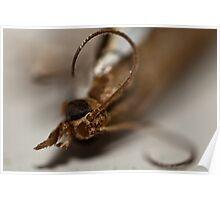 Spider Bait Poster