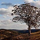 Turon Tree by Carol Ritchie