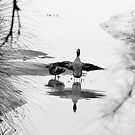 ... and this little duck went .... by JennyMac