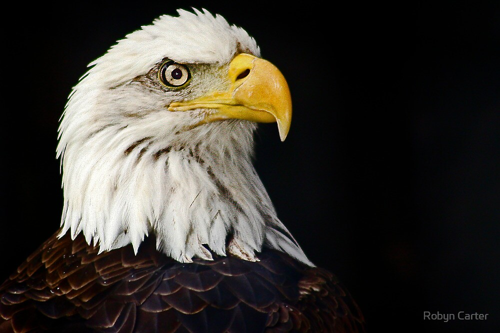 American Eagle by Robyn Carter