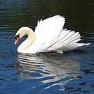 Swan by roumen