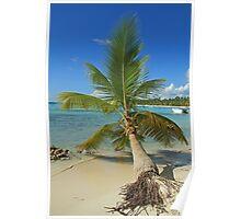Fallen Palm Poster