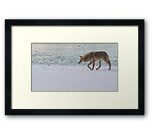 Coyote With A Mission Framed Print