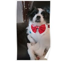 Rosie in her bow tie Poster