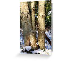Alder in winter  Greeting Card
