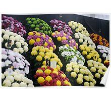Lovely flowers Poster
