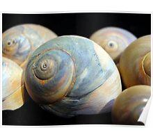 A Sea of Shells Poster