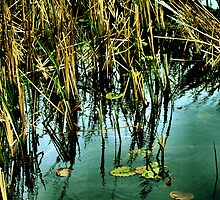 Reeds And Reflections 2 by Barry W  King