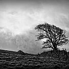 Wuthering Heights by Kurt  Tutschek