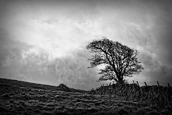 Wuthering Heights by Kurt  Tutschek