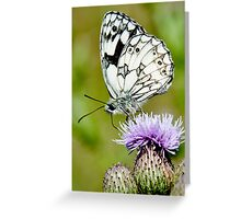 A Marble White Butterfly Greeting Card