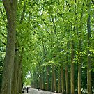 L'avenue des arbres. by Chris Tarling