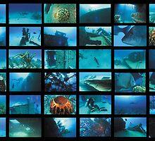 Blue Bahamas by aquamotion