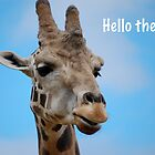 Hello There! Giraffe by Ron  Hanson