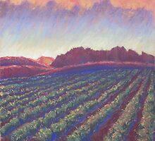 Vineyard Sunset by Susan Genge
