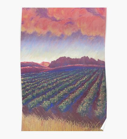 Vineyard Sunset Poster