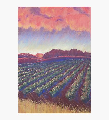 Vineyard Sunset Photographic Print