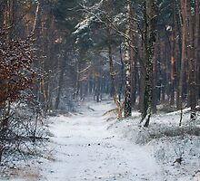 Winter in the woodlands by Gerard Heijink