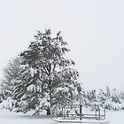 Merry-go-round. Snow. The Good Life. by Rachel Sonnenschein