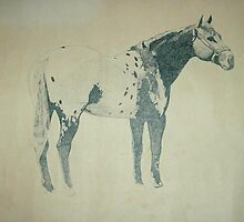 pointed appaloosa by servi53