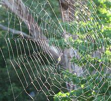 Mandala Web by GemmaWiseman