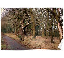 Hall Lane, Gypsy Wood Poster