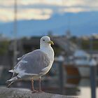 Gull and Homer Harbour by Melva Vivian