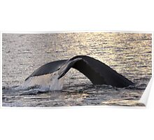 Sunset Whale Tail....Dedicated to Laura Poster