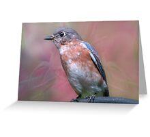 Bluebird in Spring Greeting Card