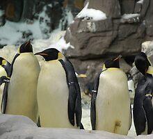 Emperor Penguins by Ron  Hanson