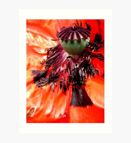 Wild series;Orange Poppy  flower X!... Art Print