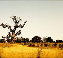 a vast Senegal landscape by beautifulscenes