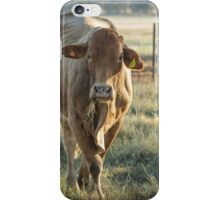 Cow In The Morning Light  iPhone Case/Skin