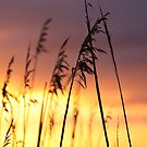 GRASSES by Patricia Gibson