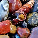 Pebbles and shells, Seven mile beach, NSW, Australia by John Spies