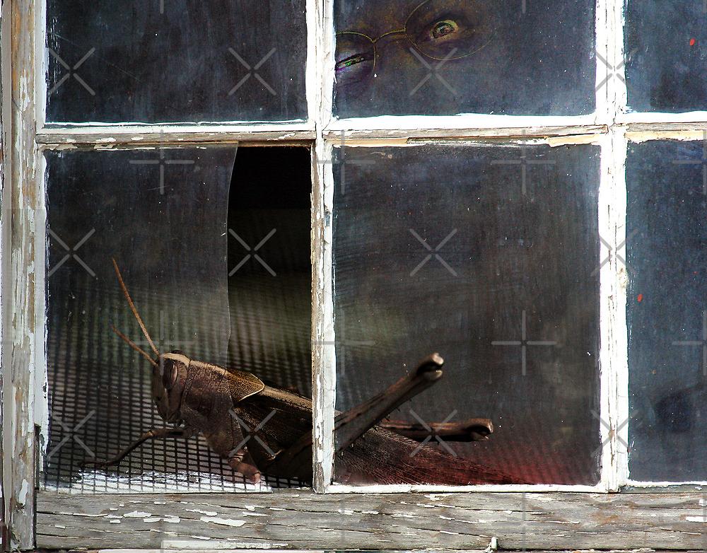 On The Dark Side Of The Window by CarolM