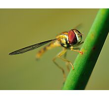 Insect Photographic Print
