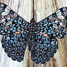 Butterfly 1 by ys-eye