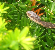 Snake in the Grass by unigrackon