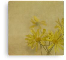 Golden Daisies Canvas Print