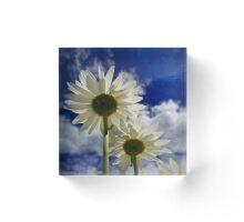 Daisies Acrylic Block