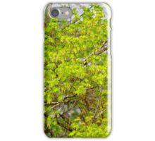 Maple tree blossoms 1 iPhone Case/Skin