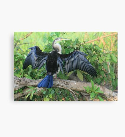 Hanging out to dry - Kakadu, NT  Canvas Print