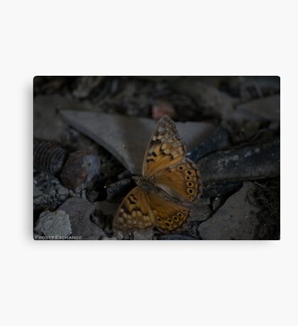 Beauty in Decay Canvas Print