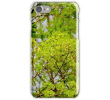 Maple tree blossoms 2 iPhone Case/Skin