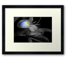 Black and White Iris Framed Print