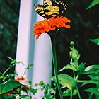 Solitary Butterfly by comeinalone