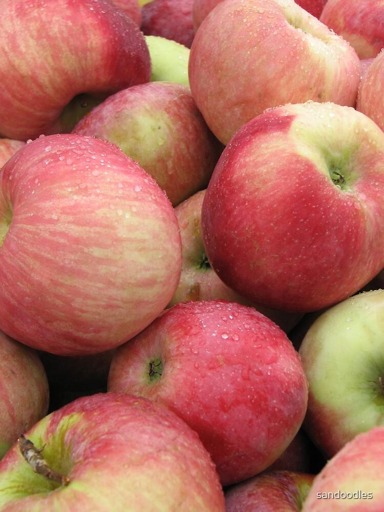 fresh apples by sandoodles